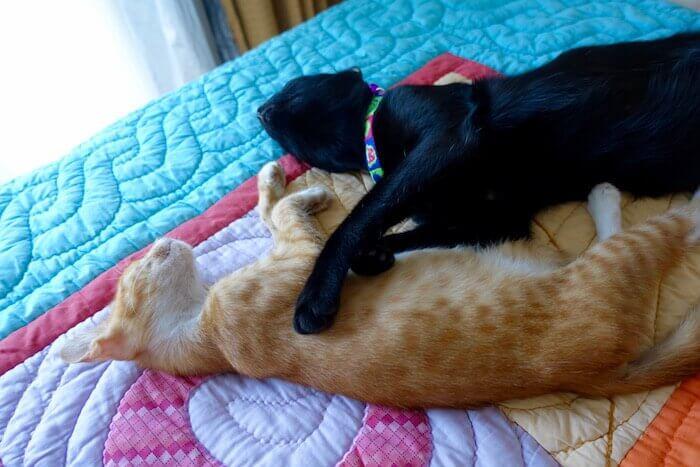 eatdrinklaos-vientiane-cat-menagerie-blackie-socks