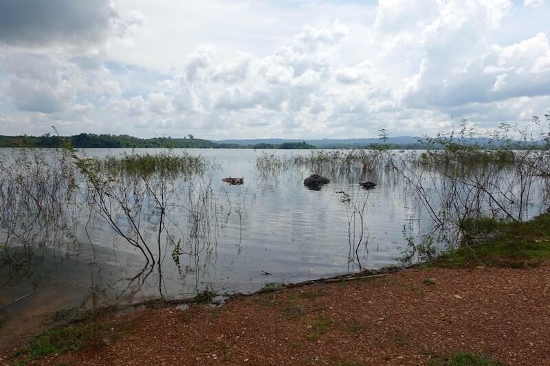 eatdrinklaos-vientiane-lao-lake-house-buffalo
