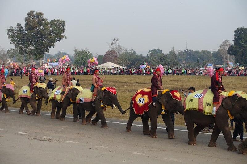 eatdrinklaos-xaignabouri-elephant-festival-baby-elephants