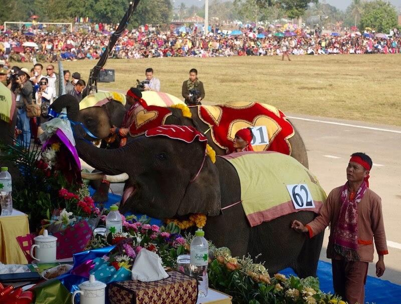 eatdrinklaos-xaignabouri-elephant-festival-elephant bouquets