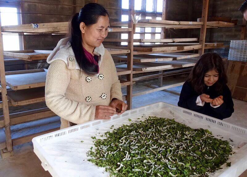 eatdrinklaos-xiang-khouang-plain-jars-mulberries-silkworms