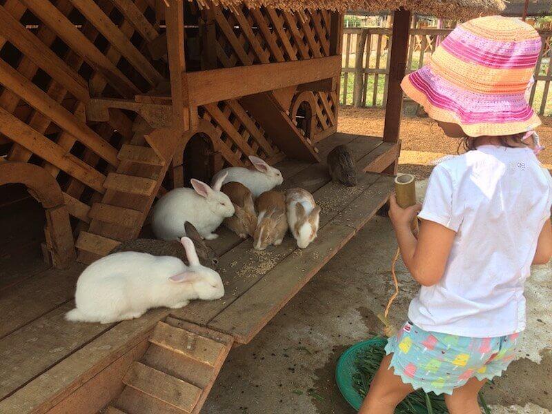 eatdrinklaos-luang-prabang-buffalo-dairy-rabbits
