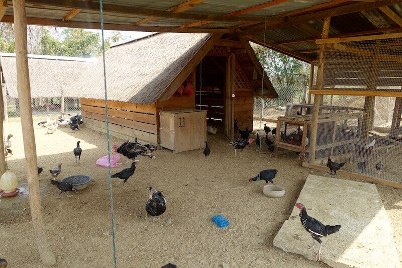 eatdrinklaos-luang-prabang-buffalo-dairy-birds