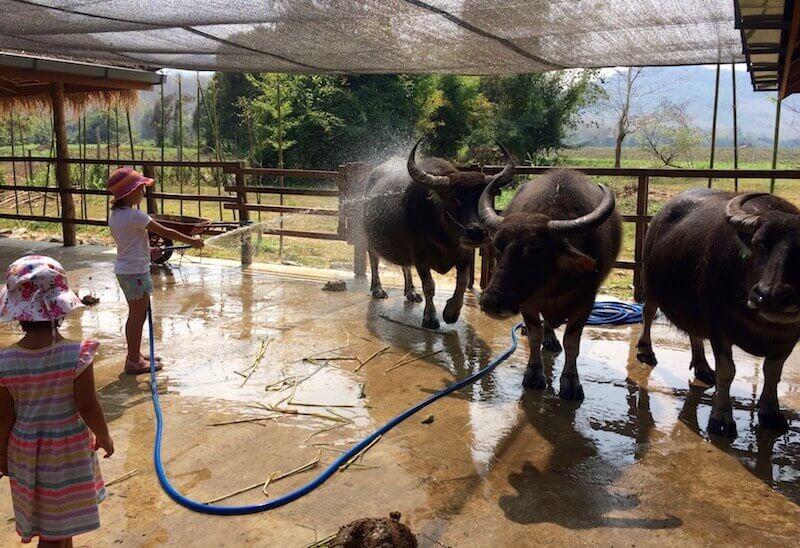 eatdrinklaos-luang-prabang-buffalo-dairy-bath