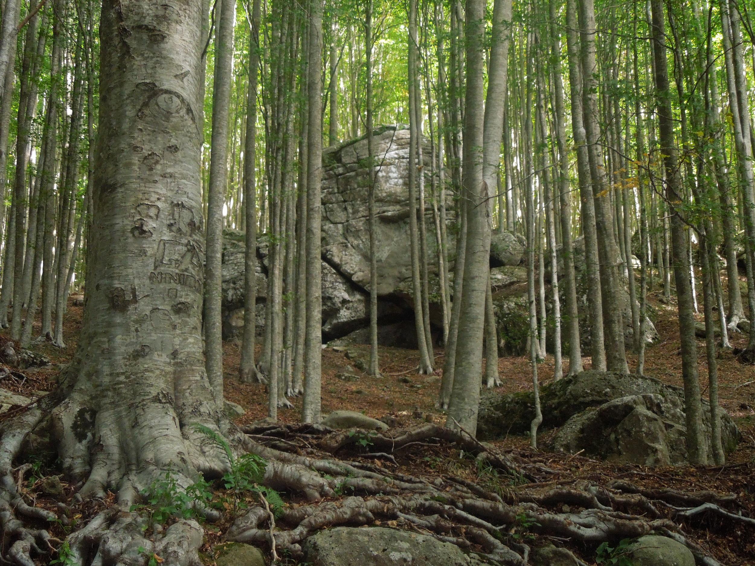 Forest, IL Cilento