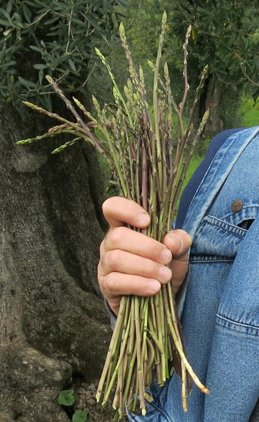3-asparagi-monte-massico.jpg