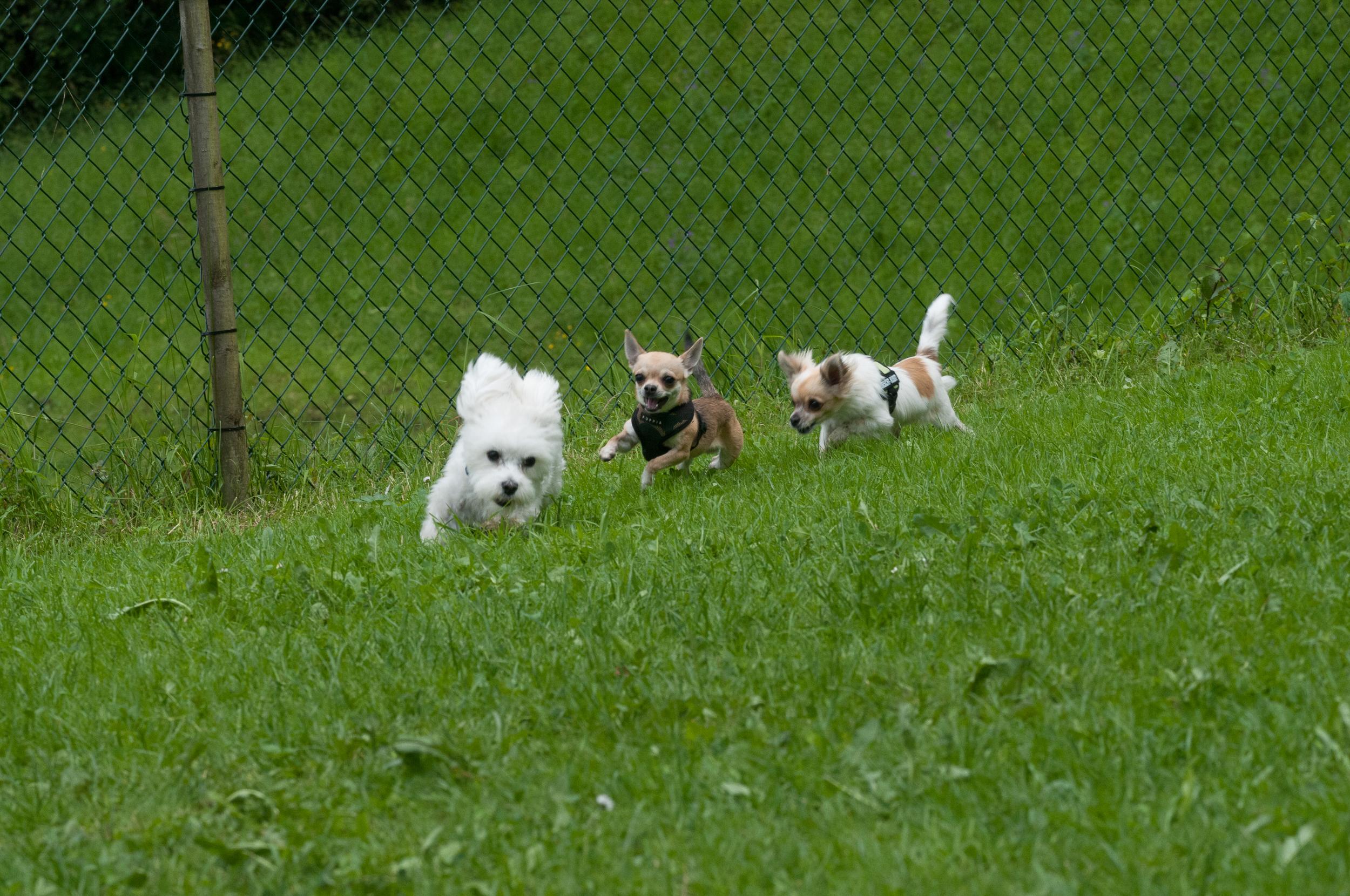 Kleinsthunde (82 von 144).jpg