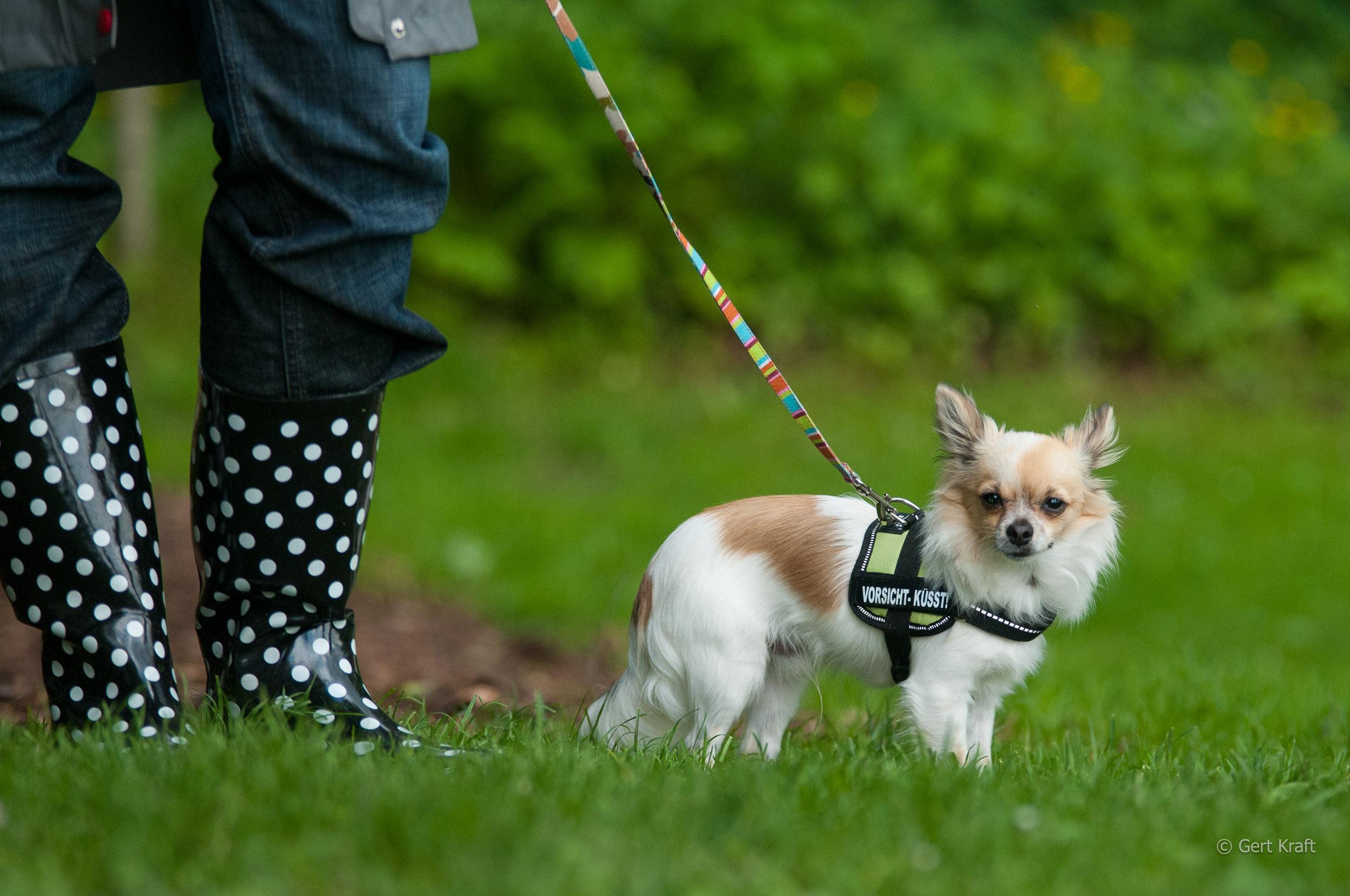 Kleinsthunde (142 von 144).jpg