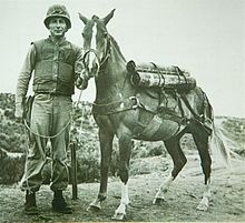 Reckless in her battlefield gear, with her primary trainer, Sgt Joseph Latham