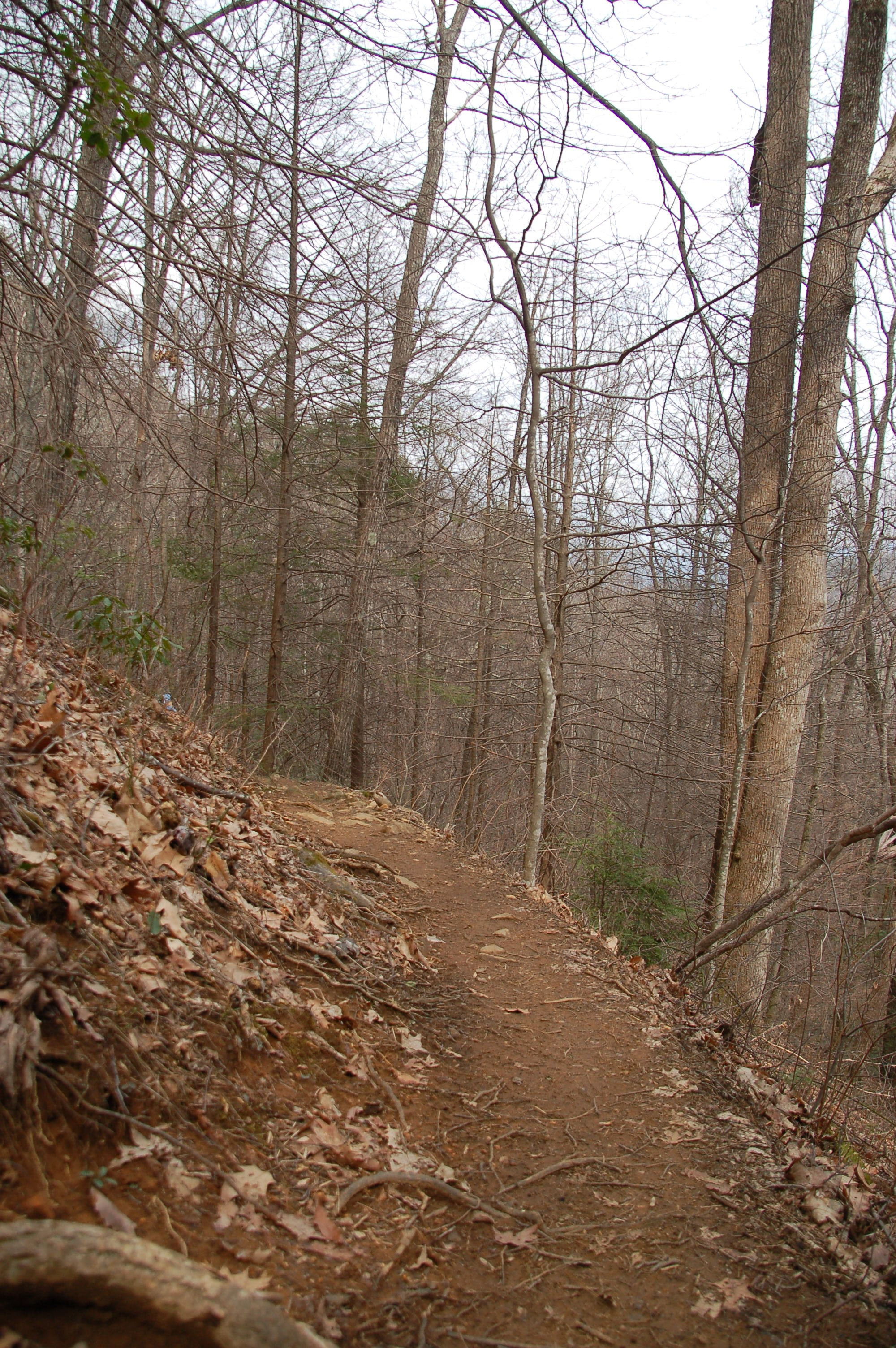 Narrow Trail at Vogel State Park