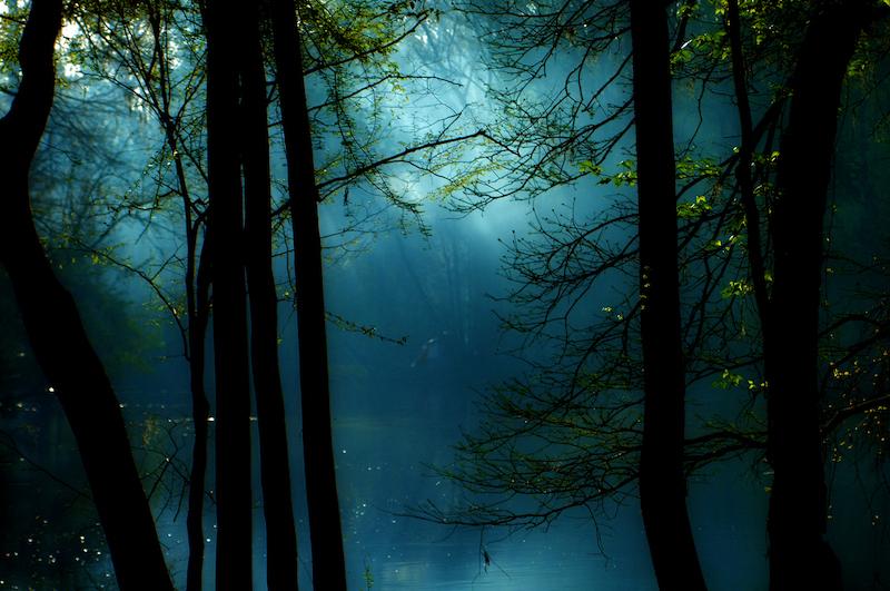 mystical forest website.jpeg