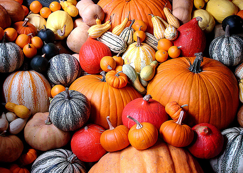 Pumpkins-galore-03.jpg