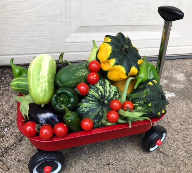 a beautiufl summer Garden harvest collected in a radio flyer wagon, during a maintenance visit at the Gardens at oakpoint.