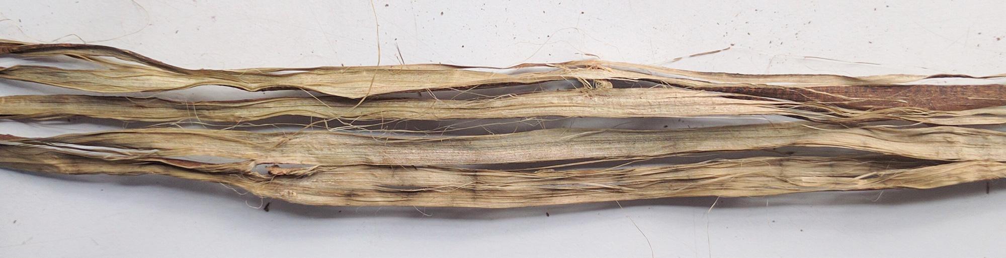 Close up of bark ribbon, fiber on the inside