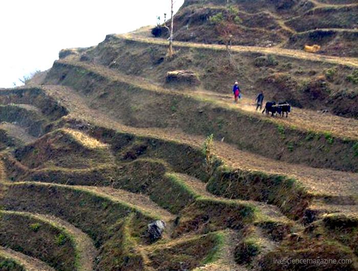 Himalayan-farm-livesciencemagazinedotcom-2937-himalayan-mountains-hike-culture-ecology.jpg