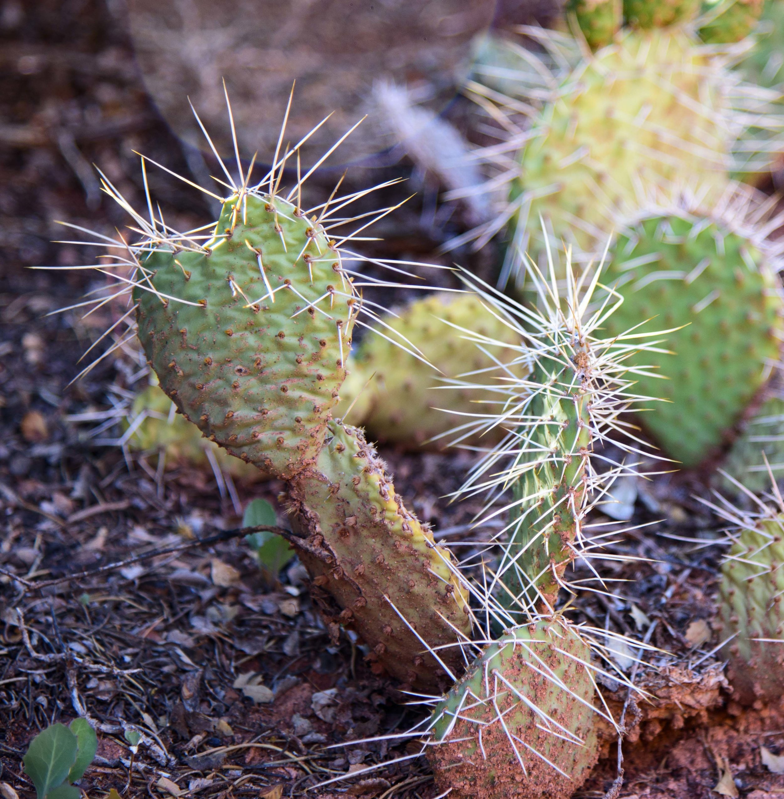 Embrace the heart, even when it is guarded and prickly