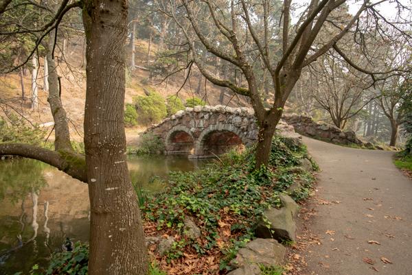 Bridge to Wellness.jpg