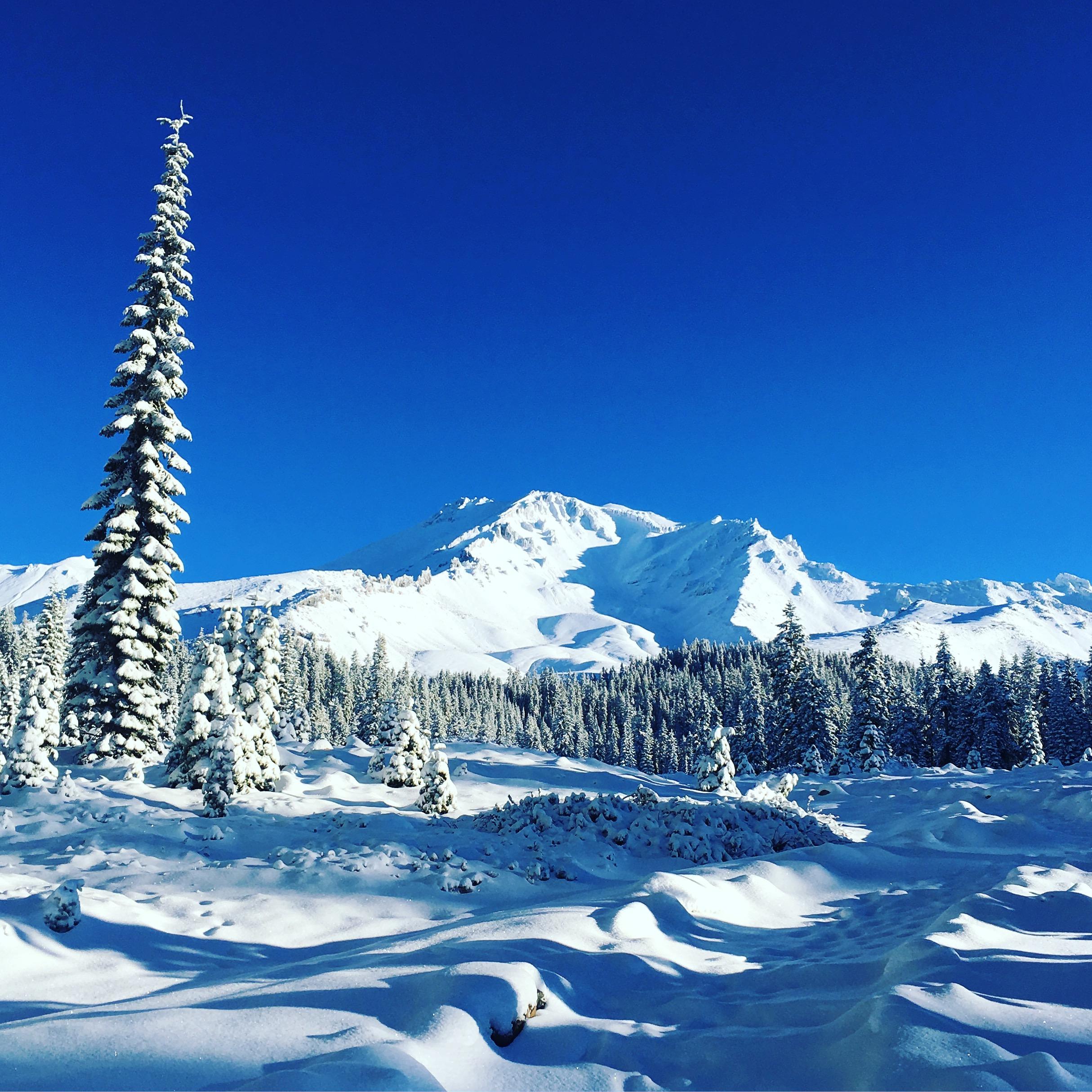 Shasta in the snow.JPG