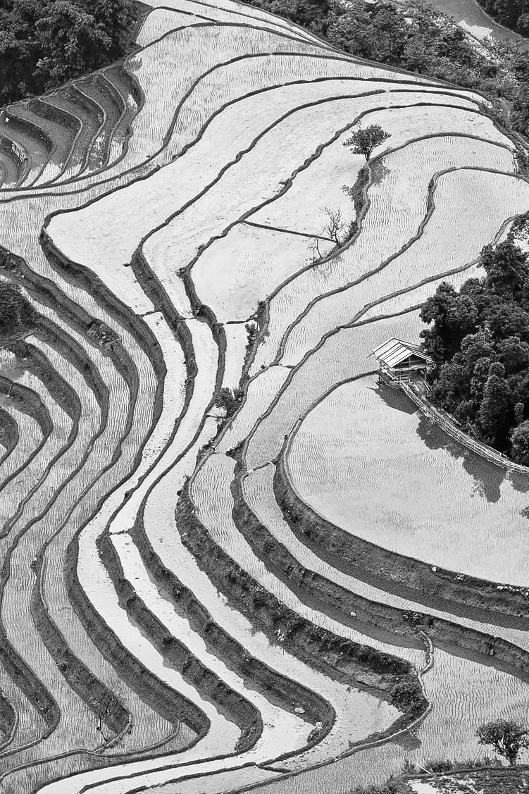 Slightly frozen rice terraces at Sapa