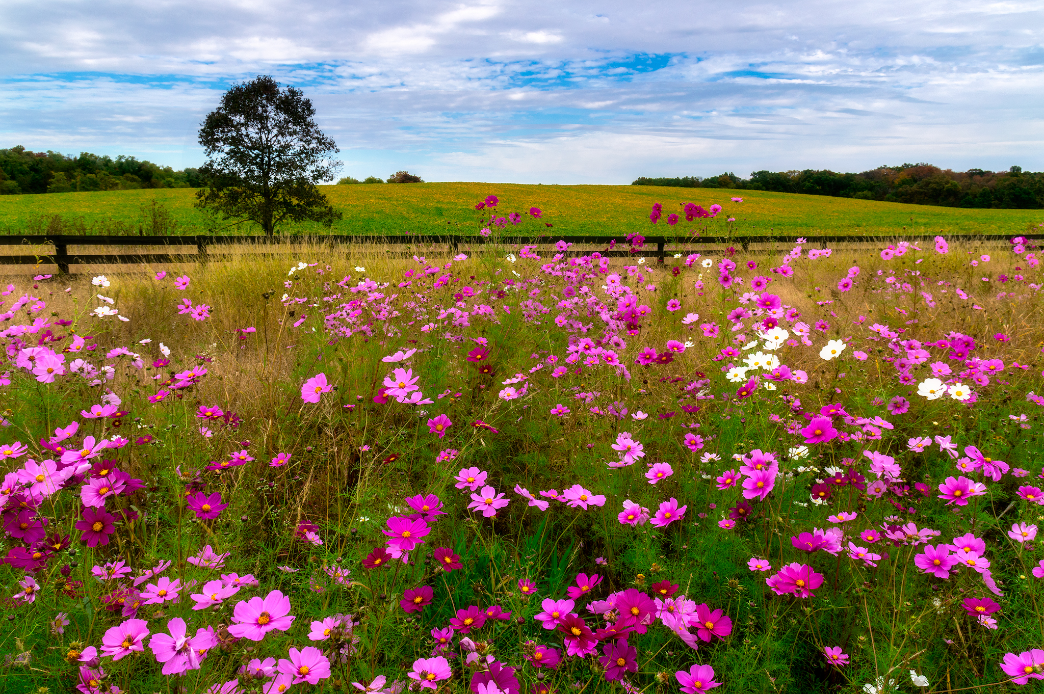 Field of Cosmos
