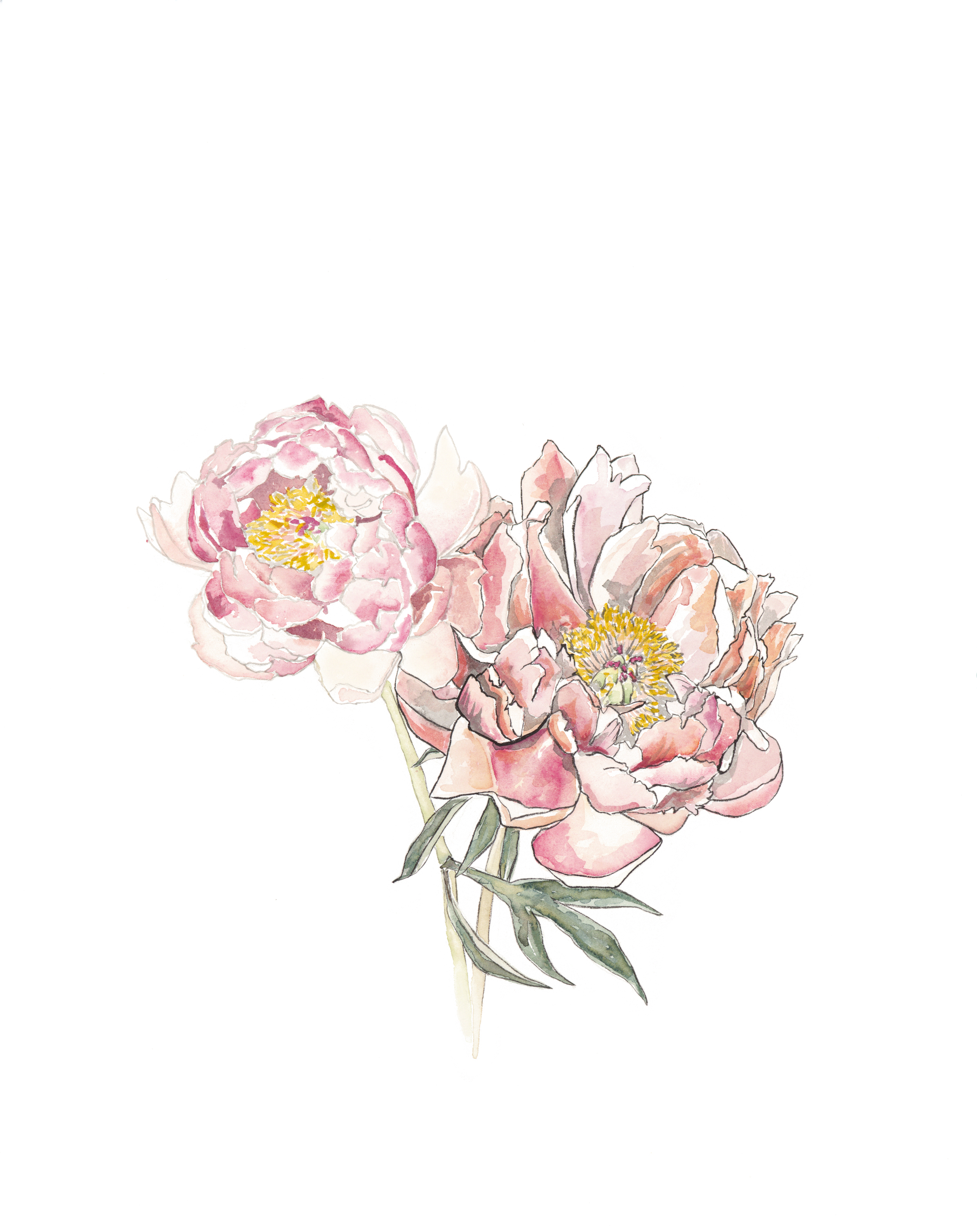 "Blush Peony [16x20"" - $95]  giclee print of an original 16x20"" sumi ink and watercolor painting of a backyard peony."