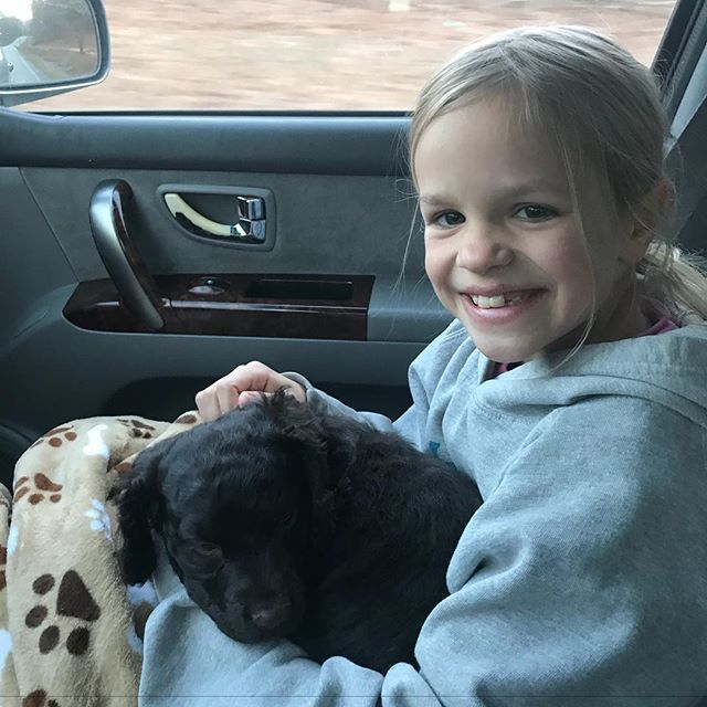 Pure bliss! Little bundle of brown joy joining the Marmilu Farm's family. Happy 2018 everybody! #marmilufarms #littlebrowndog #boykinspaniel