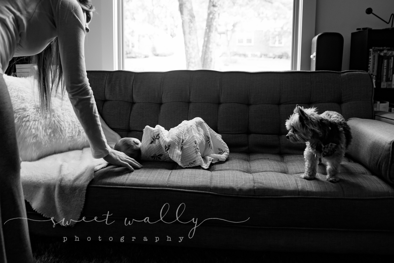 Fur Baby & First Born | Sweet Wally Photography | Nashville Newborn Photographer