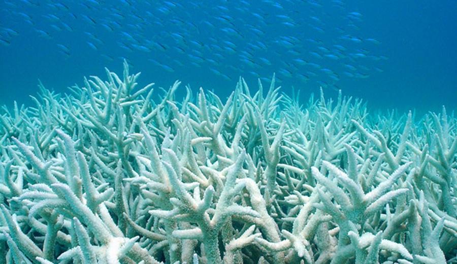 bleached-coral.jpg