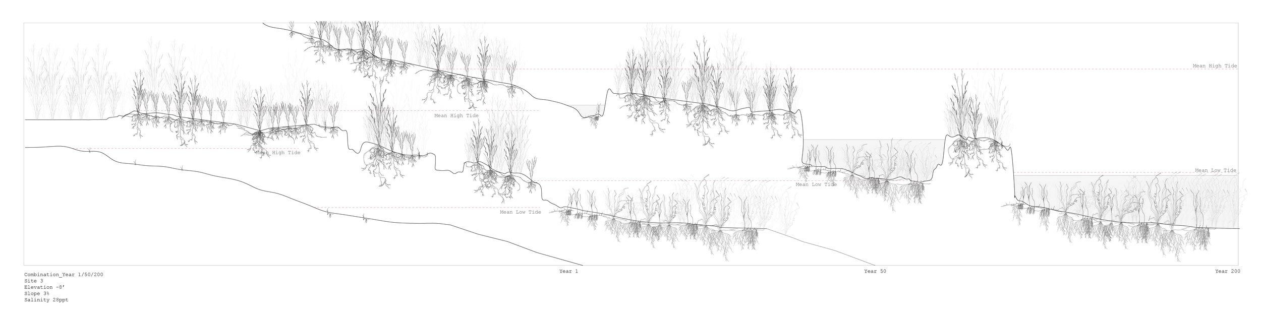 Spartina + Zostera, Growth Analyses