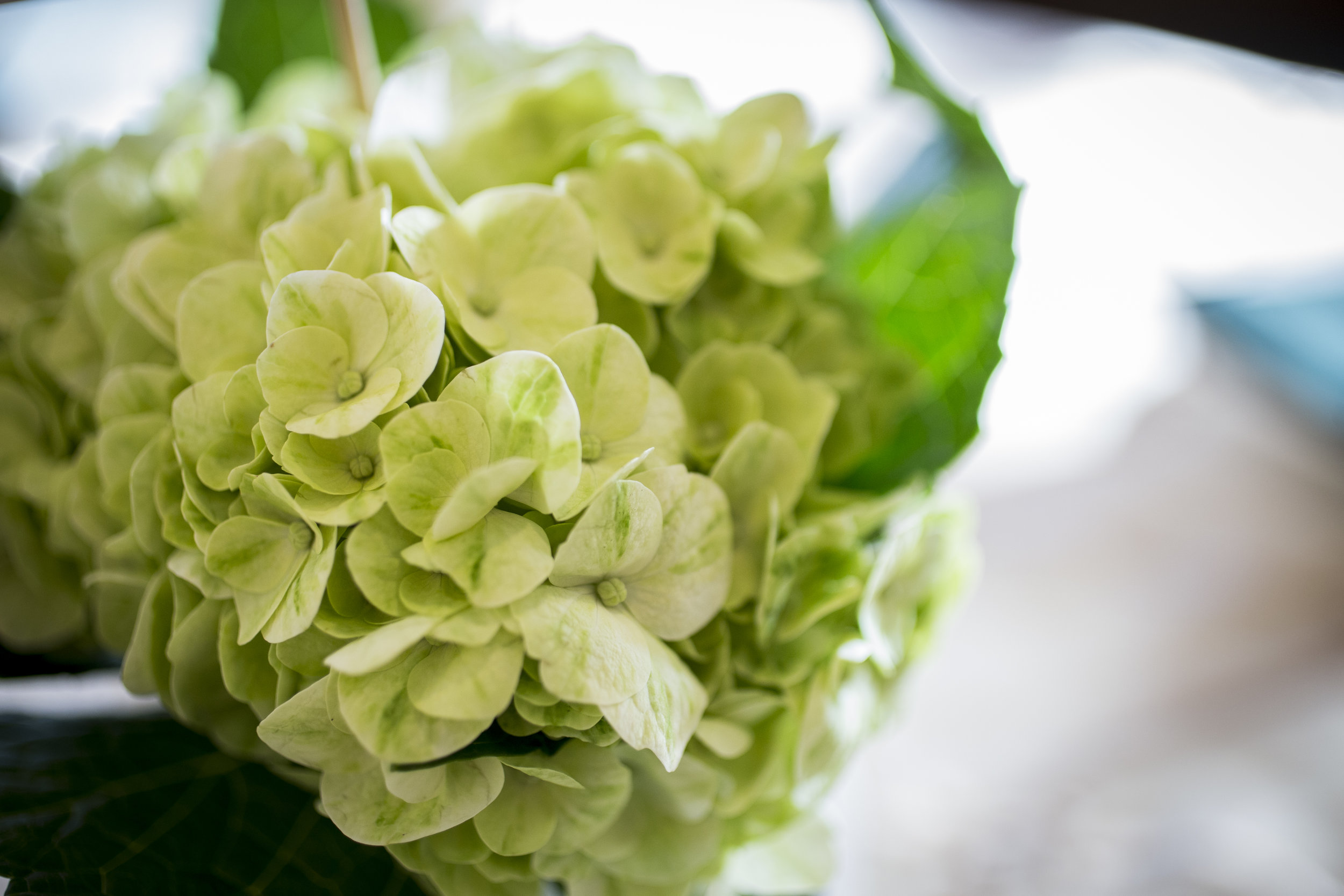 Antique green hydrangea | Courtney June Photography | Sixpence Events & Planning | Pantone color of the year 2017 greenery