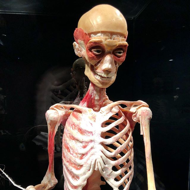 Fascinating exhibition at @sciencenorth @gunthervonhagensbodyworlds Truly amazing. 😳 #bodyworlds #sciencenorth #howtheydothat #knowledgeispower #health #educational #sudbury #roadtrip
