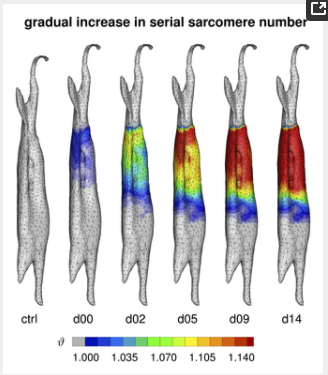 Weppler CH, Magnusson SP. Increasing muscle extensibility: a matter of increasing length or modifying sensation?. Phys Ther. 2010;90(3):438-49.