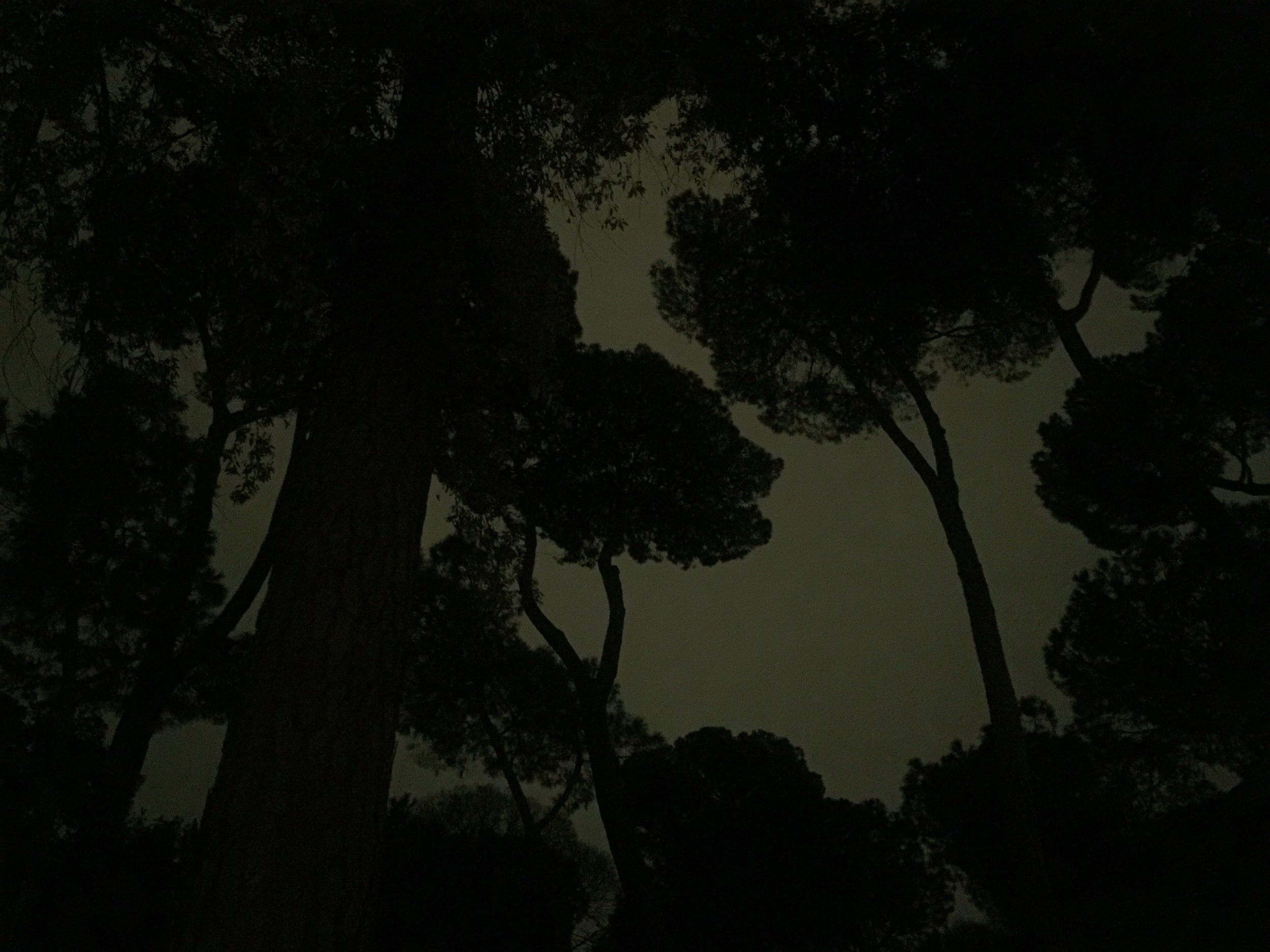 borgh trees at night.jpg