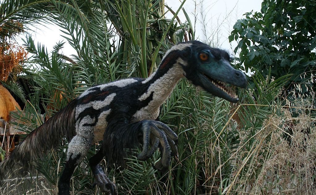 Velociraptor recreated by Salvatore Rabito Alcón;  http://artificialanimals.com/  From Wikimedia Commons