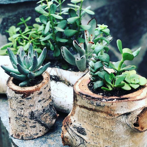 Luke Succulents.jpg