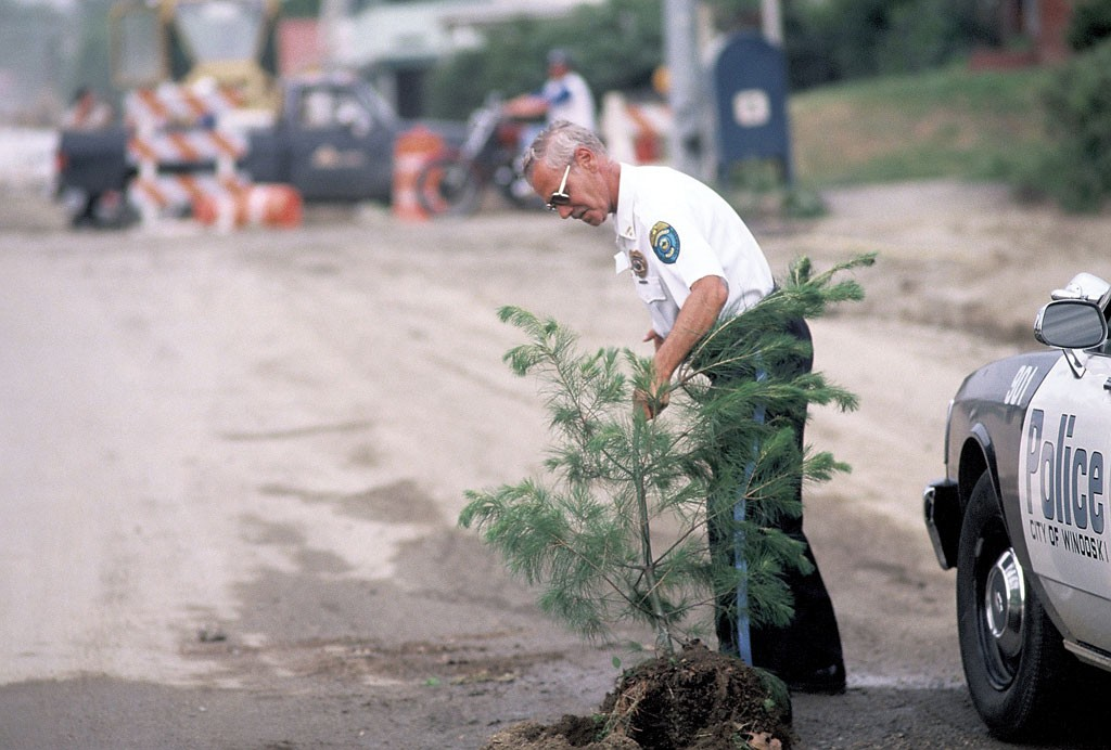 A policeman uprooting one of the trees the Bandit planted