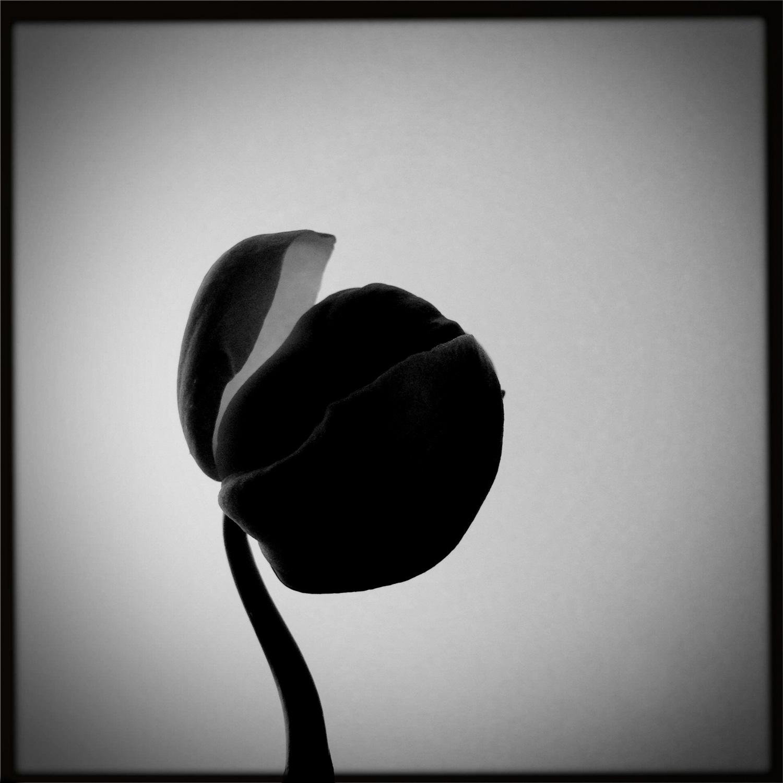 KailyKoutsogiannis01-Flower.jpg