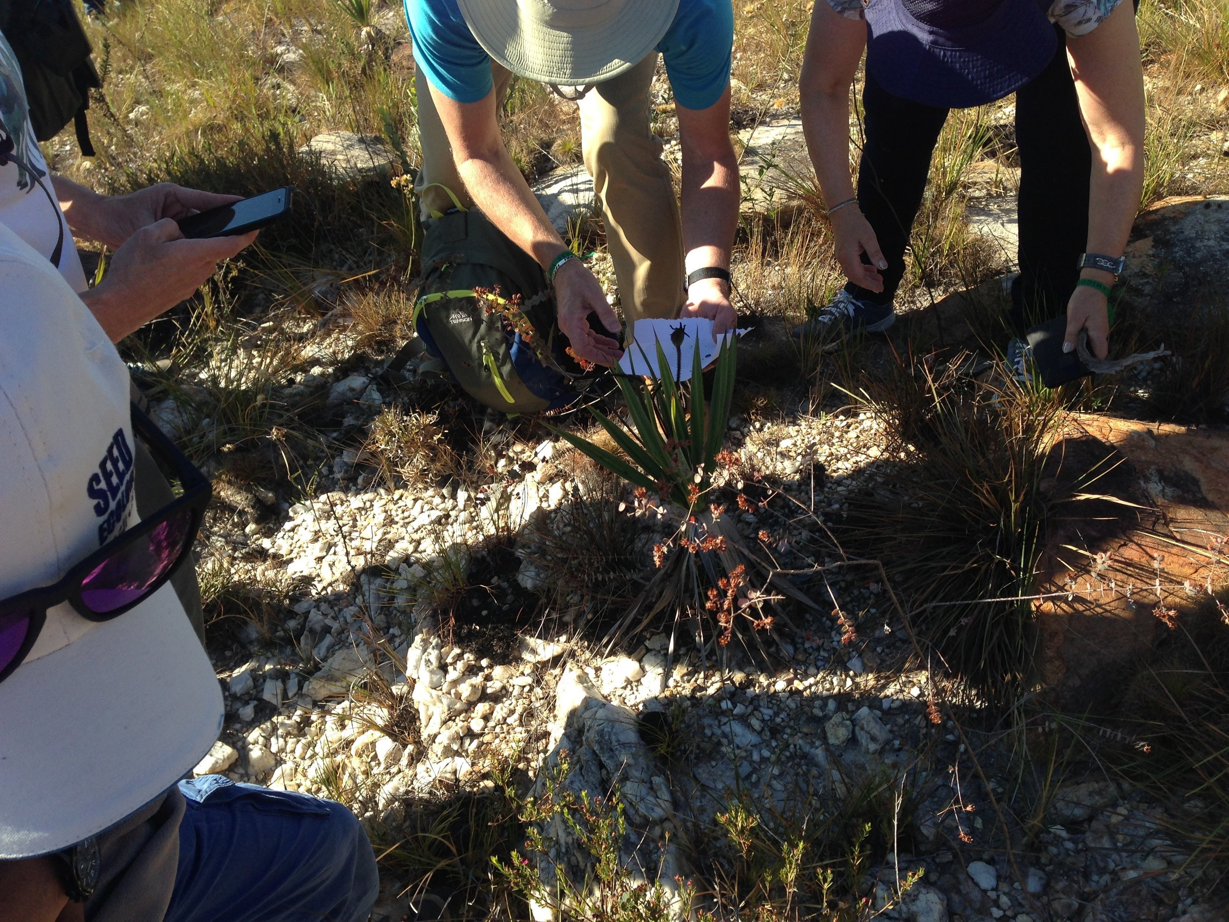 Seed collection in the field (Picture by Stefanie Frischie)