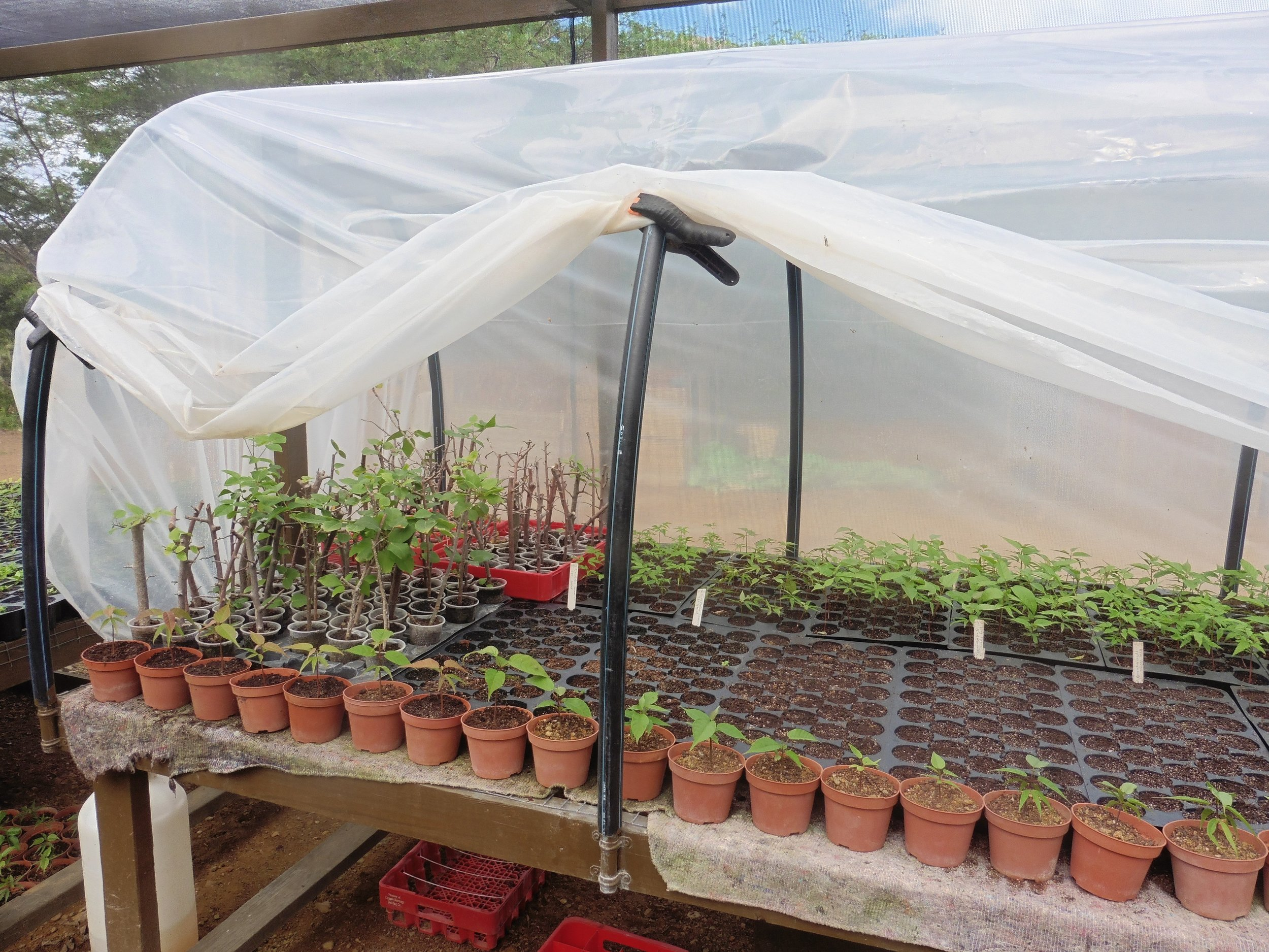 Cuttings, germinating seeds, and collected seedlings can all benefit from the constant moisture of the mist house.