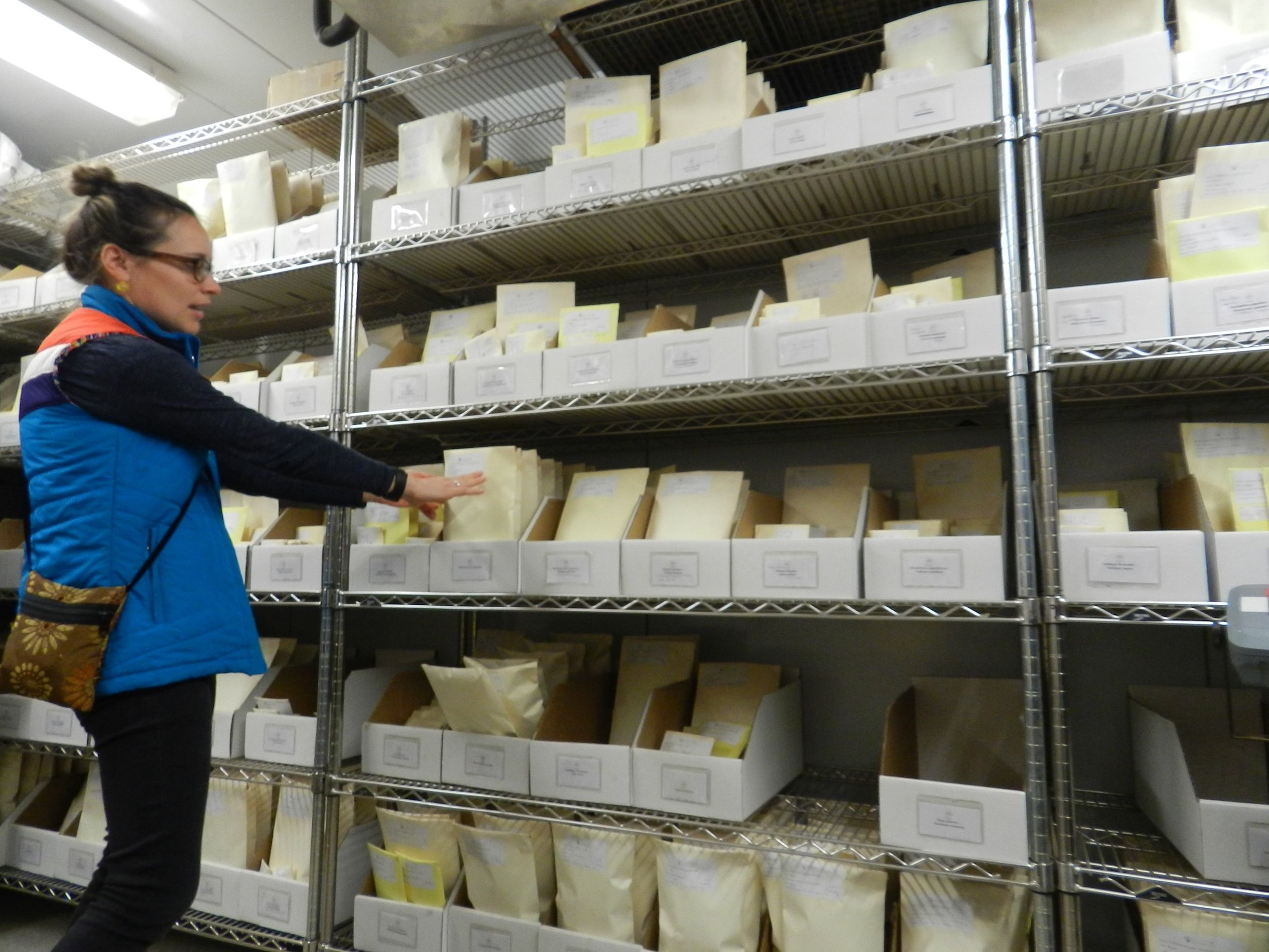 Clara Holmes, seed collection coordinator, explaining how seeds are collected and stored in the seed bank of the Greenbelt Native Plant Center. So far, ca. 633 species are stored in this bank.