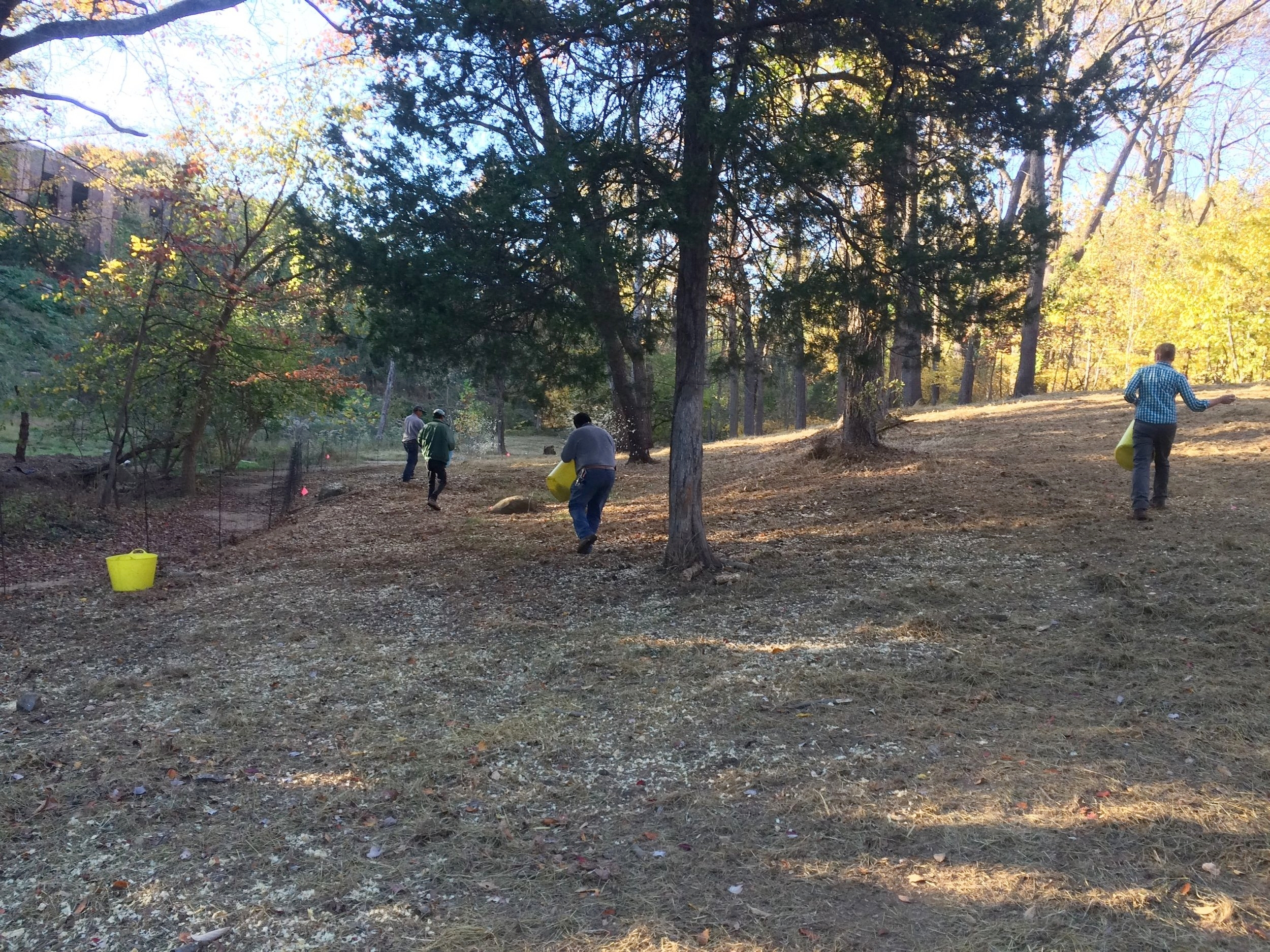 Seeding of meadow  (photo courtesy: Dumbarton Oaks Park Conservancy)
