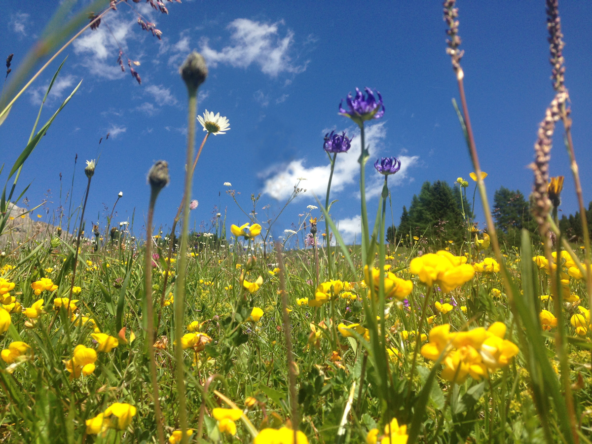 Temperate grasslands of Europe are incredible hotspots of biodiversity and are key habitats of conservation concern. Many are in decline and require ecological restoration for habitat improvement.