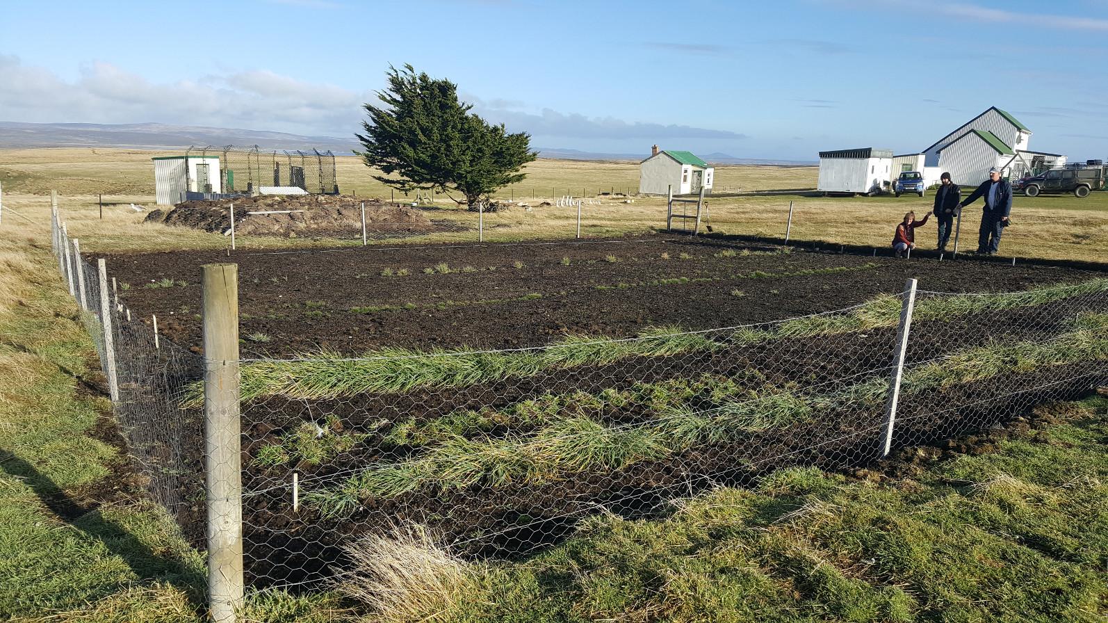 A small Native Seed Hub on Cape Dolphin Farm, East Falkland. Photograph: Falklands Conservation.