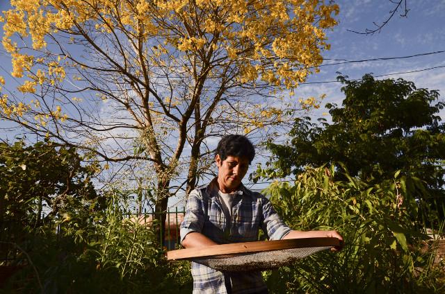 Processing native  seeds in the Nova Xavantina city - Photo_ Tui Anandi.jpg
