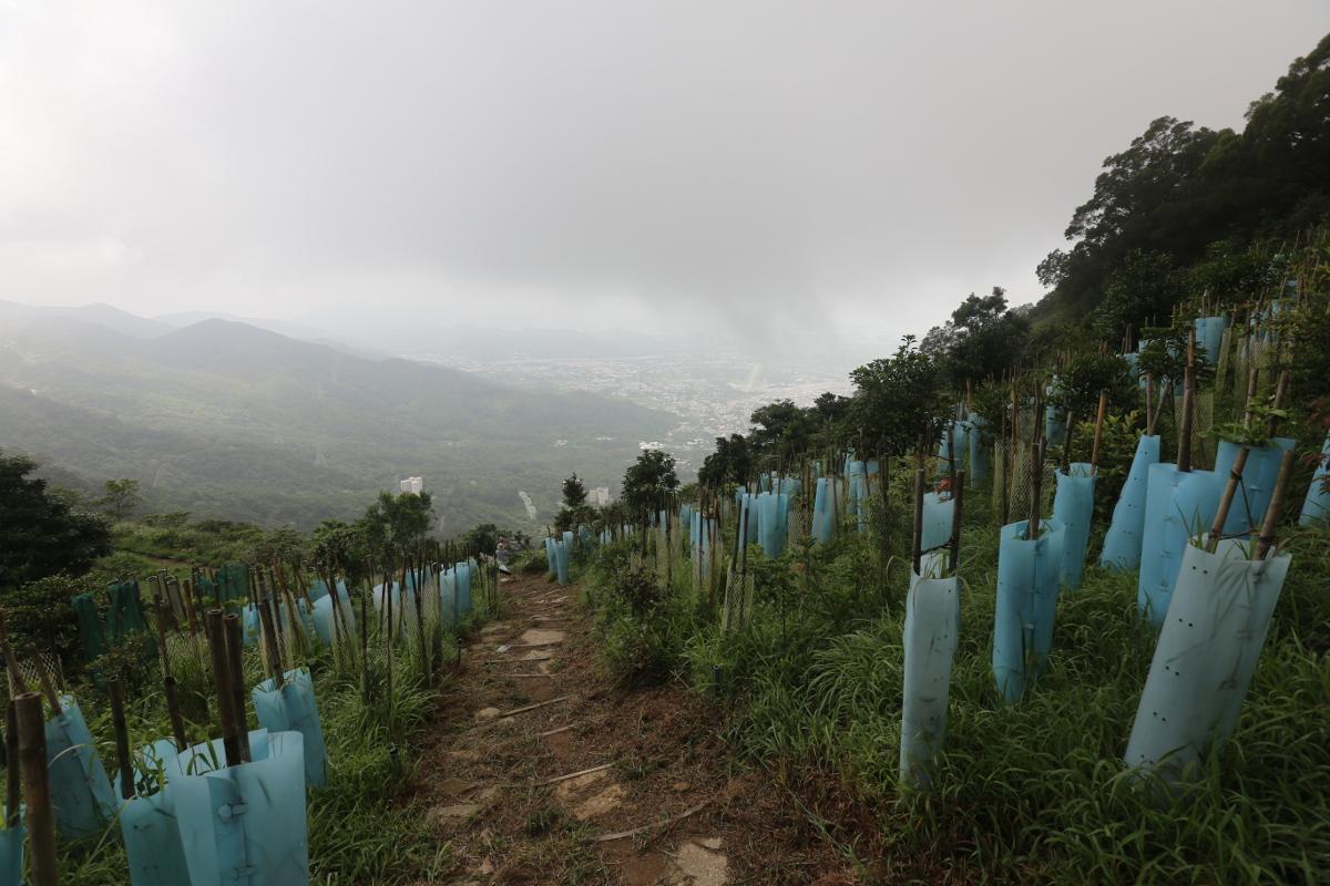 2014 Forest Restoration at Kadoorie Farm and Botanic Garden (KFBG), Hong Kong, China, in 2014 (above) and 2017 (below, photo courtesy S. Blackmore).jpg