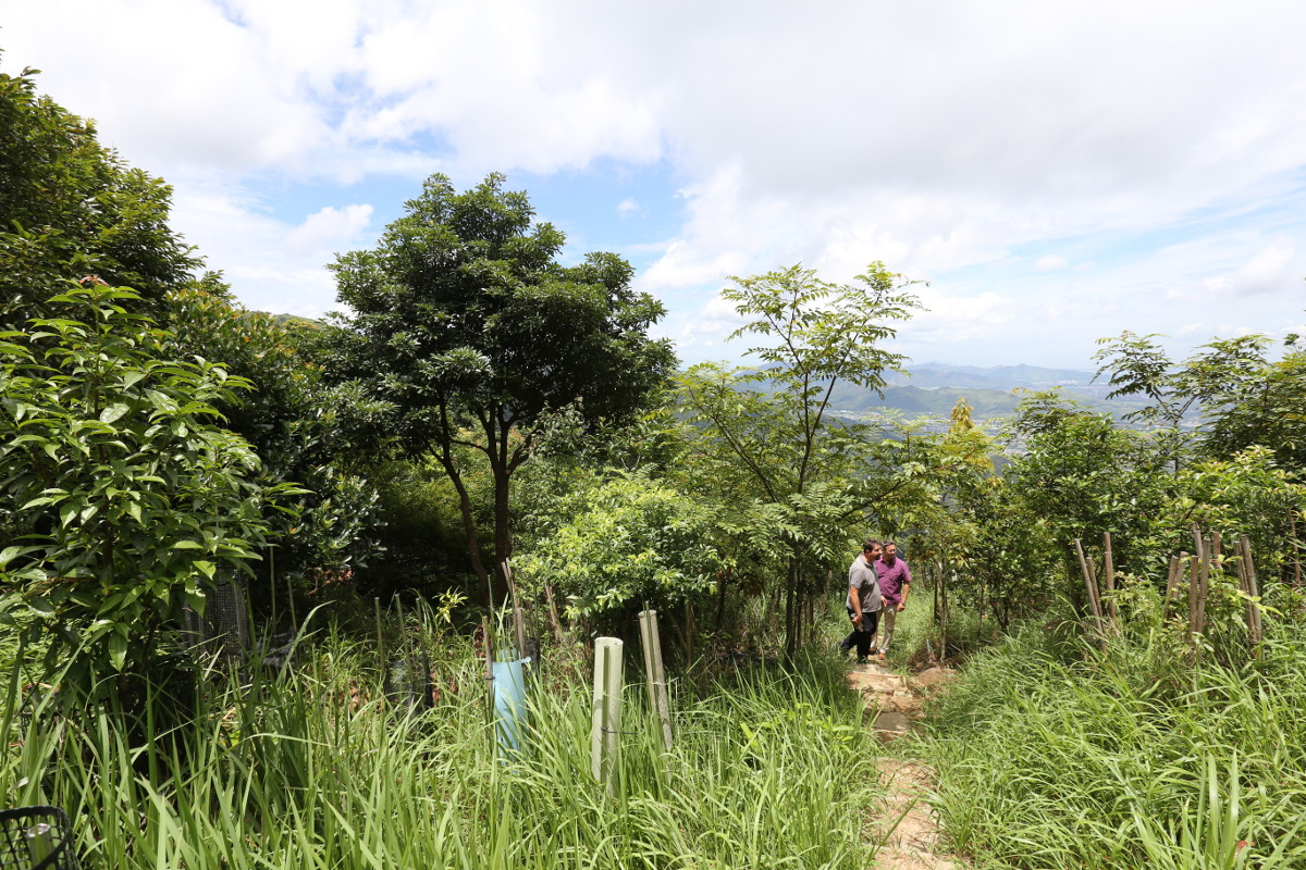 Figure 1.    Forest Restoration at       Kadoorie Farm and Botanic Garden (   KFBG   ), Hong Kong, China, in 2014 (above) and 2017 (below, photo courtesy S. Blackmore).