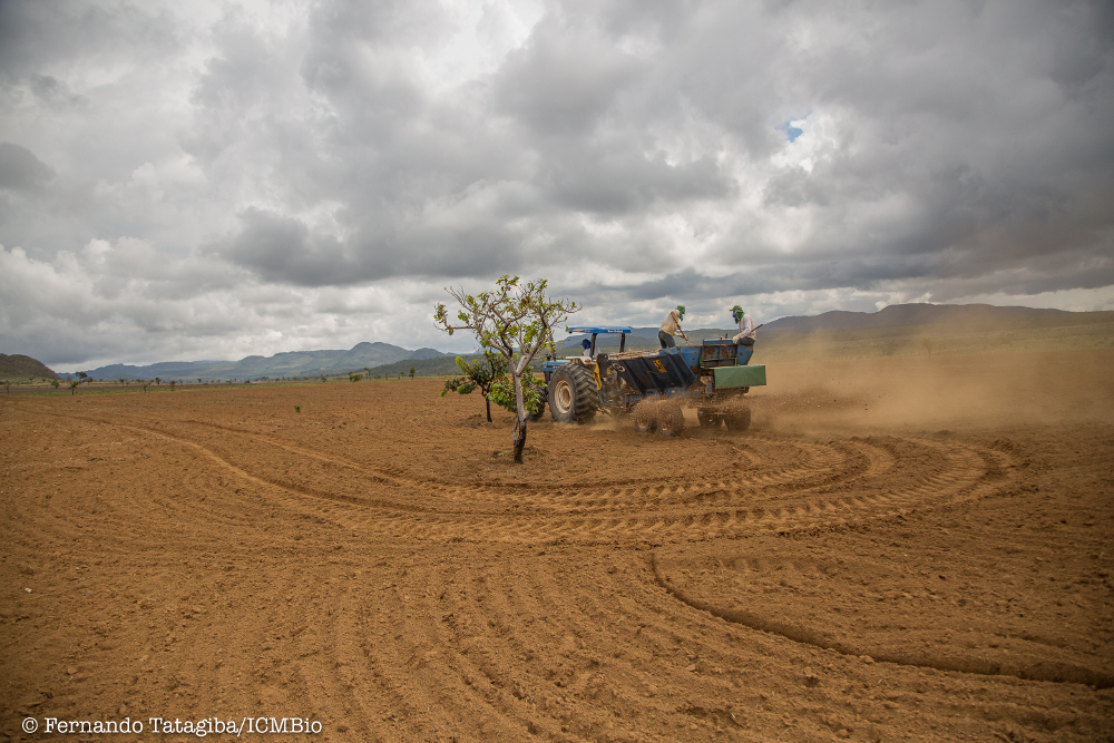 Complete clearing of exotic vegetation is one of the most effective methods to re-establish native plant communities in abandoned pasturelands of the Cerrado.
