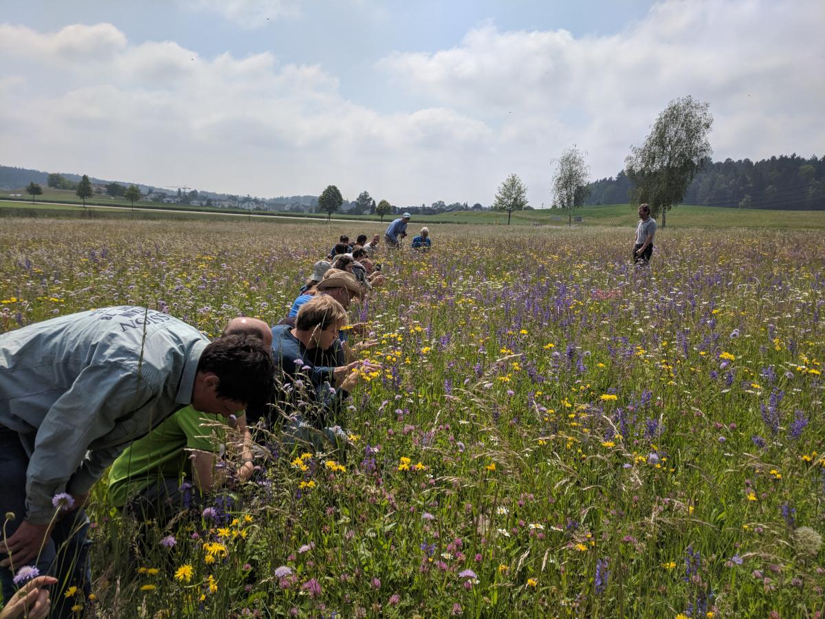 "The international guests ""feeling"" a species rich meadow in Switzerland"