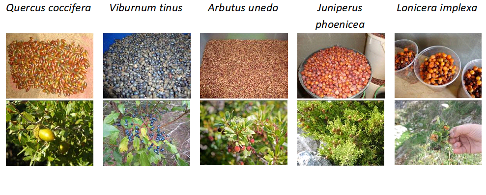 Some examples of the seeds/fruits of the species produced in the plant nursery