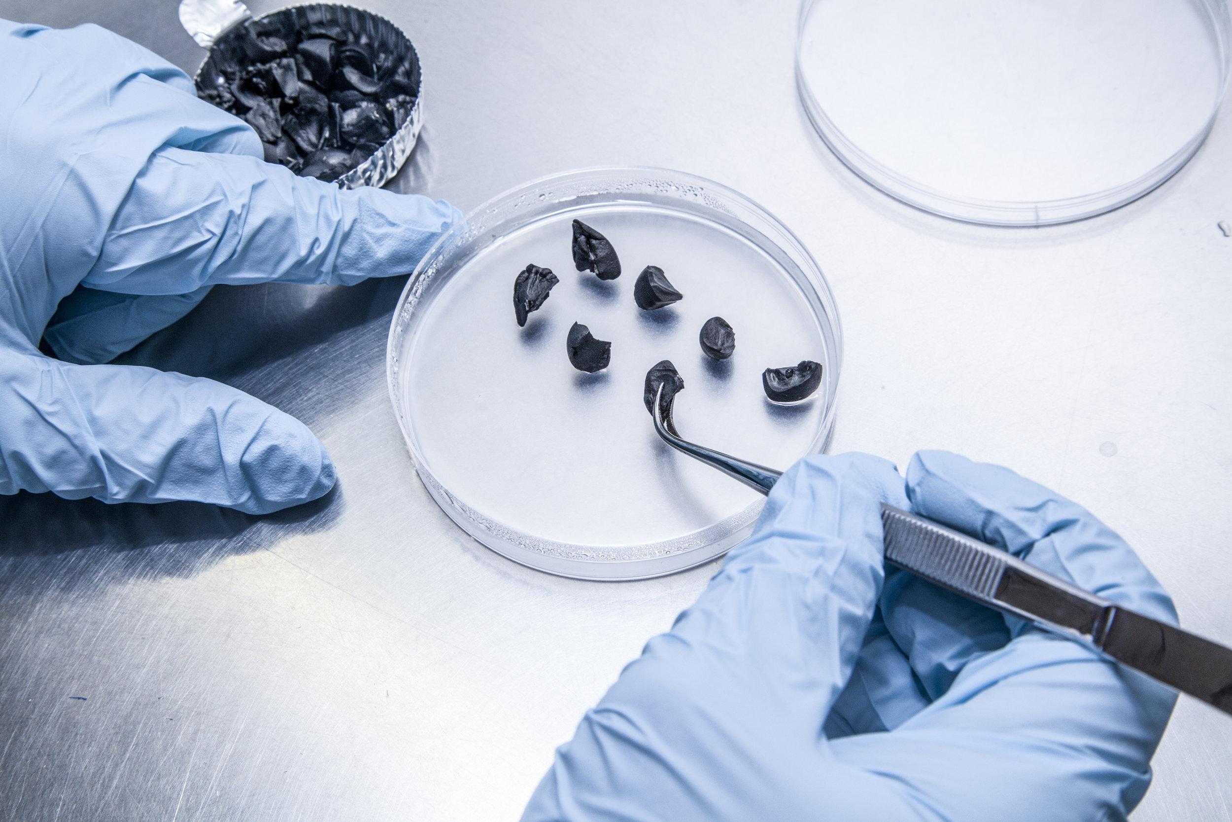 Germination tests (BG-SAR)